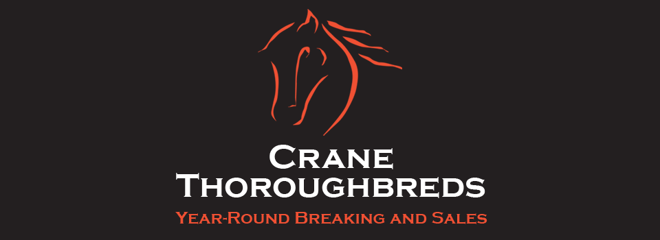 Crane Thoroughbreds, Year-Round Breaking & Sales